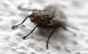 insektenschutz einfach und effektiv